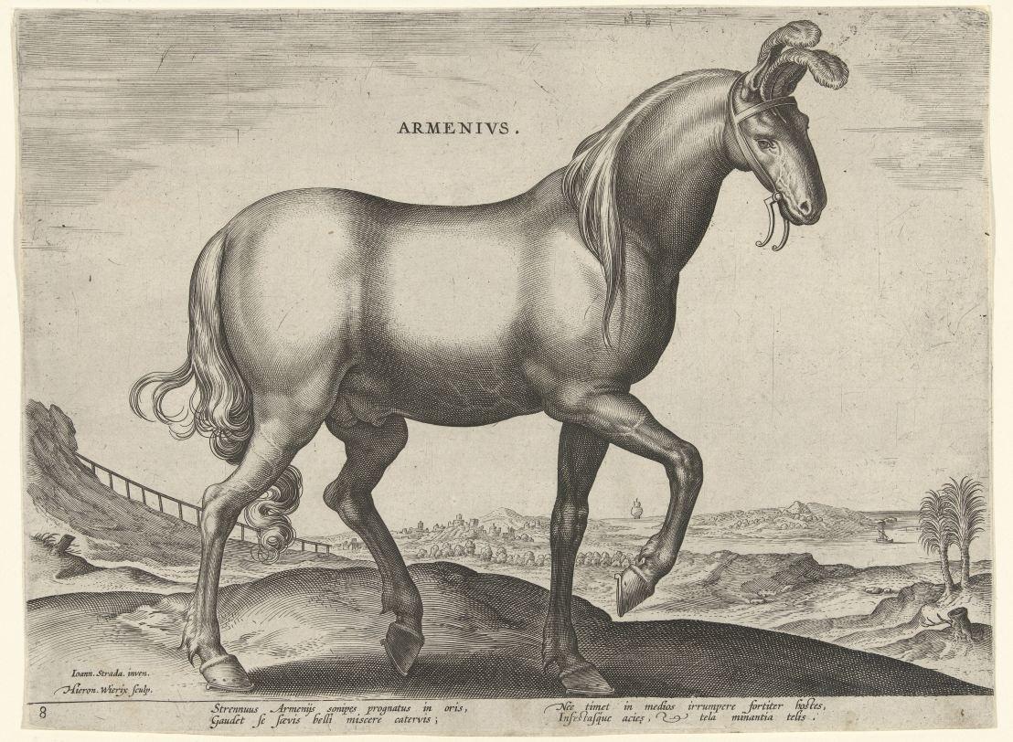 Horse from Armenia (Armenius), Hieronymus Wierix, after Jan van der Straet, c. 1583 - c. 1587
