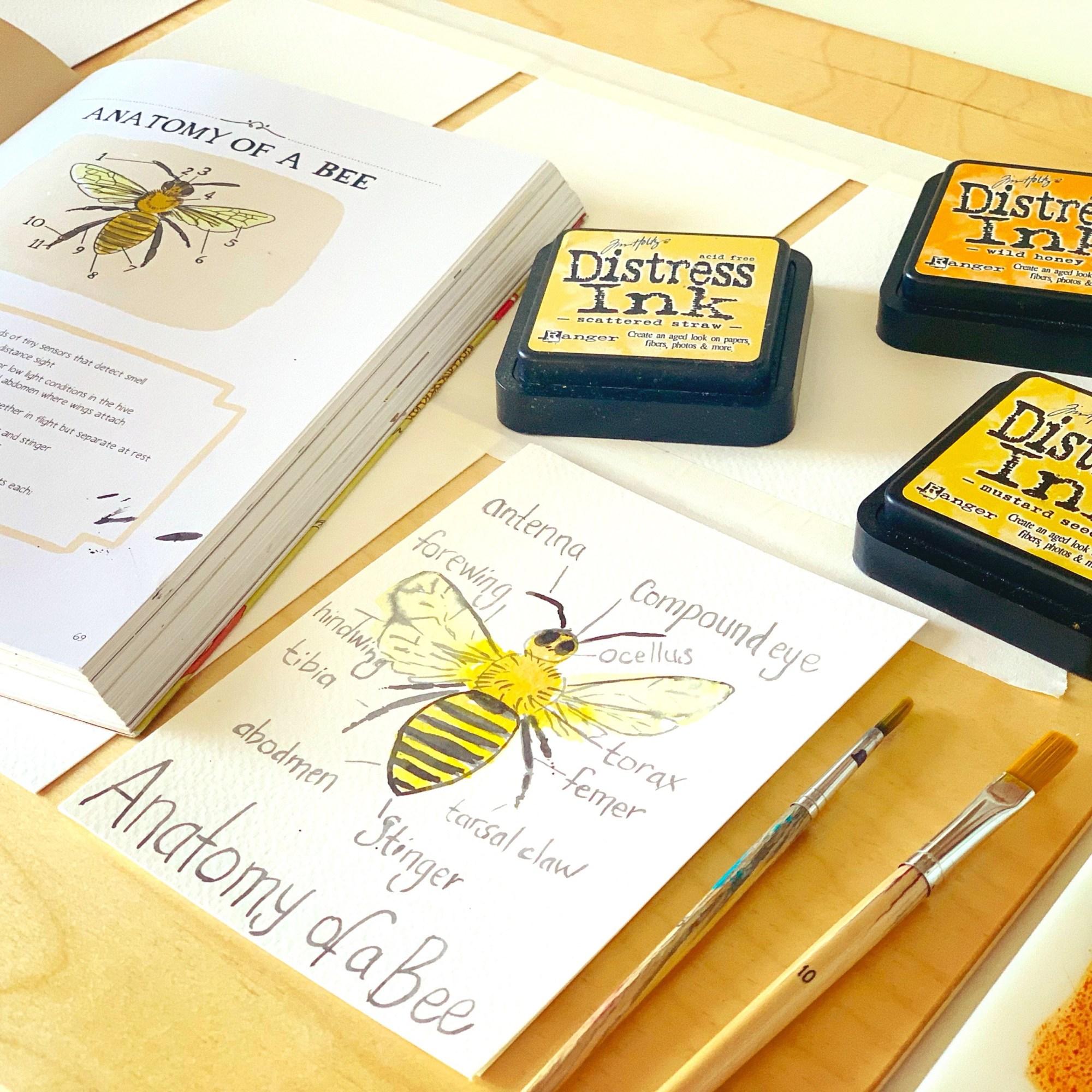 hight resolution of Bee \u0026 Honey Unit Study   Living Books