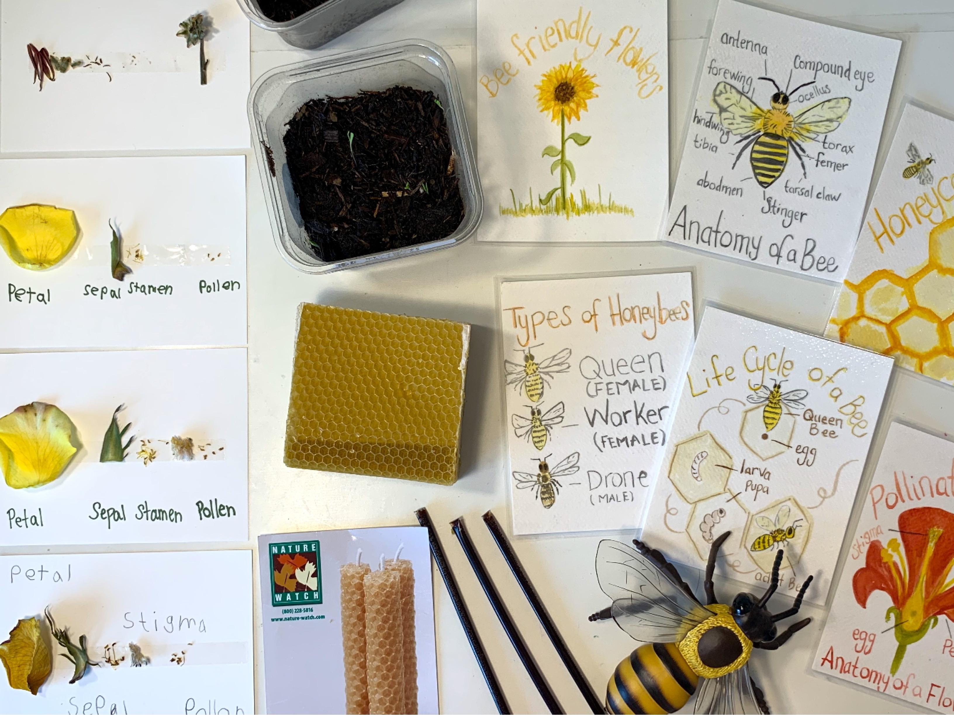 Bee \u0026 Honey Unit Study   Living Books [ 2448 x 3264 Pixel ]