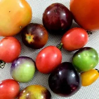 Colourful Fresh Tomatoes
