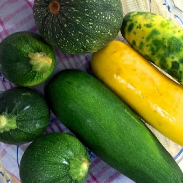 Zucchini comes in different shapes and sizes_PepperOnPizza.com