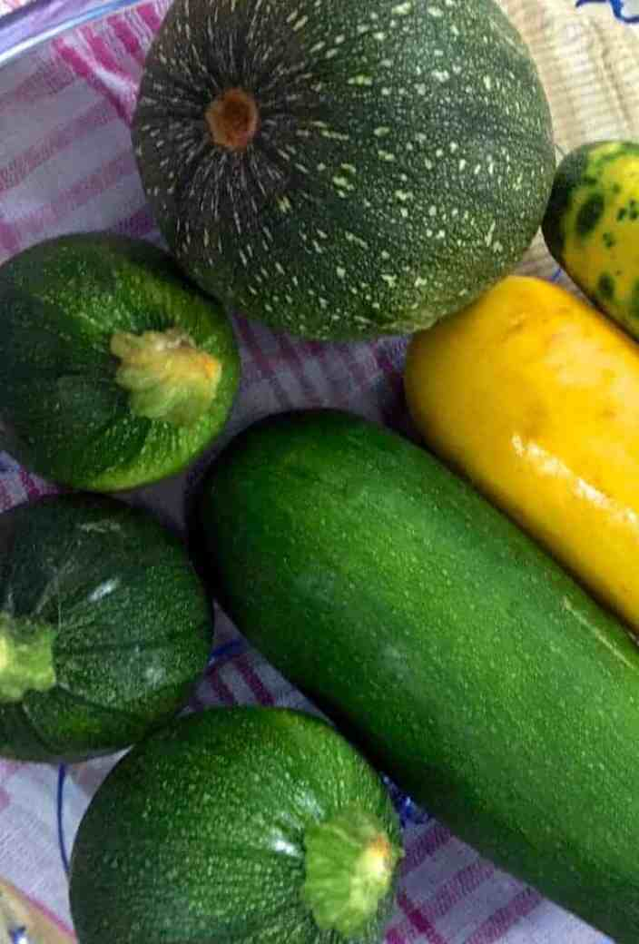 Yellow and green zucchini, some long and narrow, others plump and spherical