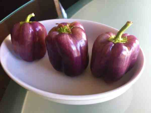 Purple Beauty Pepper A Royal Bell PepperScale
