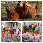 Pony Birthday Parties At The Farm Pepper Hill Farm