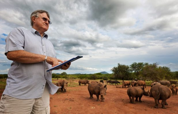 """NELSPRUIT, NORTH EAST SOUTH AFRICA, MARCH 2011: The world's largest White Rhino breeder, John Hume, 69, looks out at a few of his 500 plus White Rhino as they come in from grazing on his 6500 Hectare ranch for a daily snack of lucerne mixed with game pellets, Nelspruit, South Africa, March 19 2011. A self made multi-millionaire, Hume is a controversial character in the conservation world. He advocates a sustainable consumption of rhino horn as a renewable resource as a method to combat the plague of poaching which killed 333 rhino in South Africa in 2010, the highest ever figures and the fastest acceleration of the killing of these unique animals in history. John Hume is adament in his believes that the insatiable Asian demand for Rhino horn and the subsequent illegal slaughter can only be curbed by a sustained, humane harvesting of horn from Rhino kept on large grazing farms by professional farmers for the purposes of commercial conservation. This brings him into direct conflict with much of the conservation world, despite the recent wide-spread popularity of darting and de-horning Rhino across much of South Africa as an anti-poaching deterrent. The rise of the Asian middle class, in particular China and Vietnam, combined with recent clampdowns on permits for legal Rhino hunting, has seen the price of Rhino horn sky-rocket to a level comparable with gold. John Hume has stated that he has well over $25 million worth of Rhino horn which is legally permitted and locked away in bank vaults across South Africa, waiting for a day when he hopes it will be legal to trade. In essence Hume is like a futures trader, gambling millions on the acquisition of White Rhino which he states is both a compassionate gesture and also a great business investment if the law-makers in the conservation world """"could only see sense."""" Hume believes the Rhino has the resources through which to save itself from the threat of extinction. A fully grown horn can be harvested every 3 years with min"""
