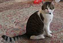 220px-Larry_the_cat_No10