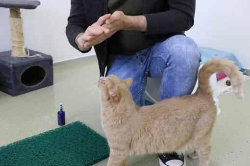 SoulMate Beruhigungsmittel für Hund Katze und Pferd