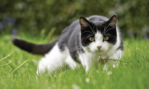 Katze Peranimal