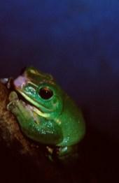 FrogInProcess