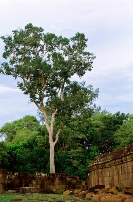 TreeRuin