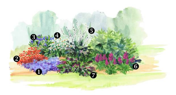 Summer Perennial Border Perennial Gardening