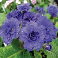How to Select and Plant Perennials - Perennial Gardening