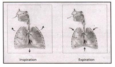 bioogy notes