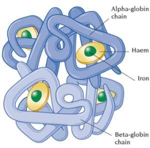structure of Haemoglobin