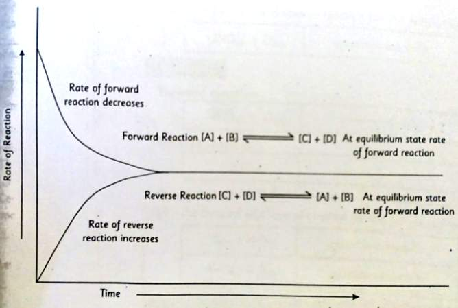 Graph showing the rate of forward and reverse reaction and equilibrium state