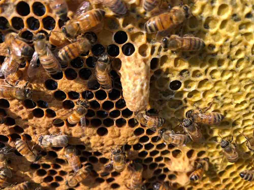 medium resolution of bee skep diagram