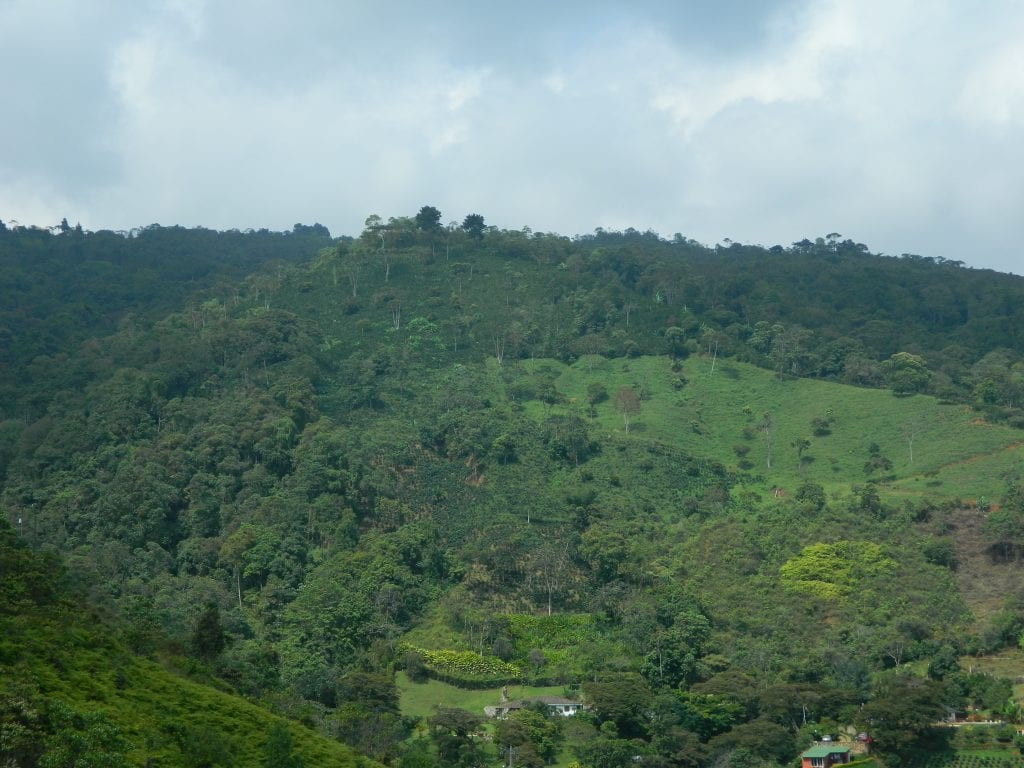 overlooking coffee farm