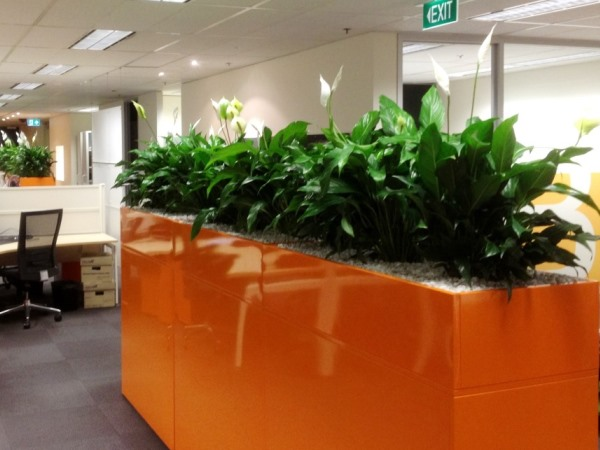 Indoor Plants Hire for Offices  Businesses  Perfection