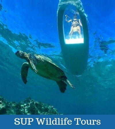 SUP Wildlife Tours
