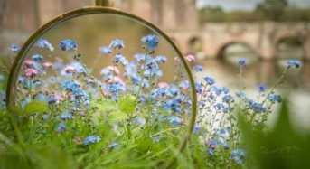 Τα ανθισμένα λουλούδια της άνοιξης μέσα από μεγεθυντικό φακό