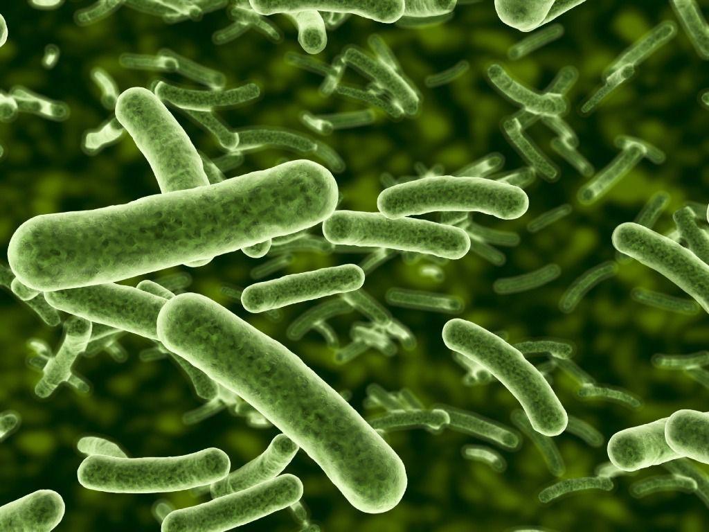 Expertos en salud alertan sobre el regreso de enfermedades exterminadas como la neumonía, colera y tifoidea.