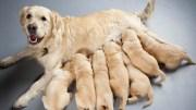 La esterilización temprana, la mejor prevención de enfermedades en perros y gatos