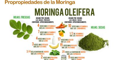Las increíbles propiedades de la Moringa, el árbol de la vida