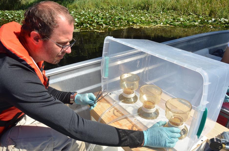 ADN Ambiental: Nueva técnica que permitirá identificar especies en humedales de Valdivia