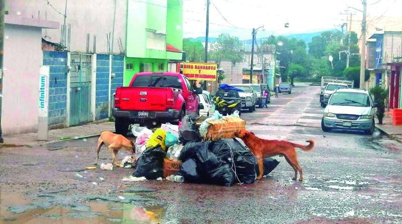Un festín se dan los canes con los montones de basura que hacen los vecinos de algunas colonias, mientras pasa el camión de la basura, situación que ha prevalecido por varios años y que algunos colonos buscan una estrategia para mejorar la recolección de basura.