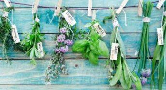 6 θεραπευτικά βότανα που αξίζει να καλλιεργείτε