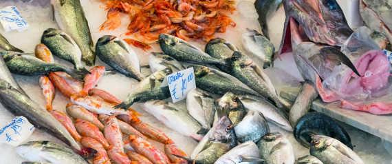 Κι ο κολιός τον Αύγουστο! Πόσο καλά γνωρίζετε τα ελληνικά ψαρικά;