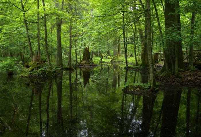 Το τελευταίο αρχέγονο δάσος της Ευρώπης!