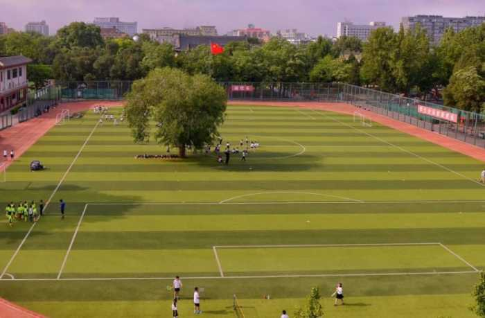 Δέντρο μεγαλώνει στο κέντρο ποδοσφαιρικού γηπέδου!