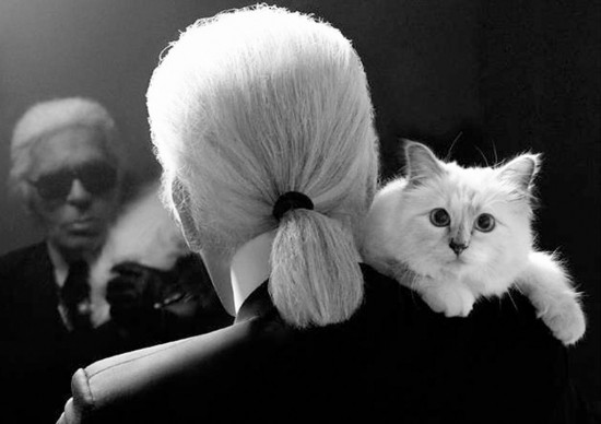 Choupette-cat-550x388