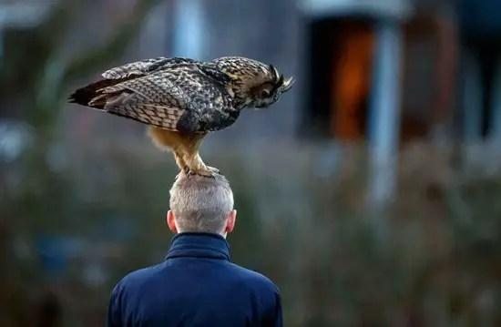 Noordeinde-owl-550x359