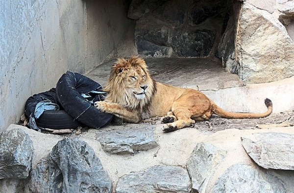 Zoo-Jeans-Japan-600x394