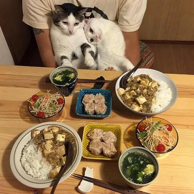 gatos-observando-humanos-cenar-naomiuno-5
