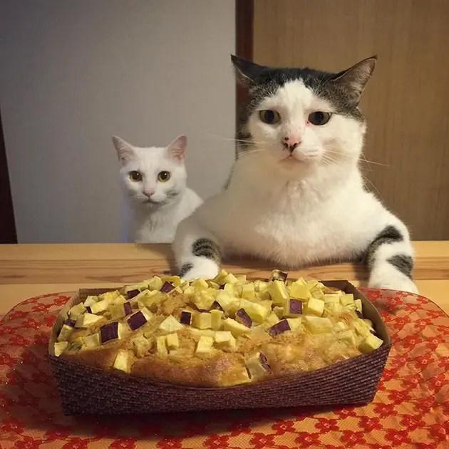 gatos-observando-humanos-cenar-naomiuno-6