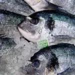 pescado_fresco