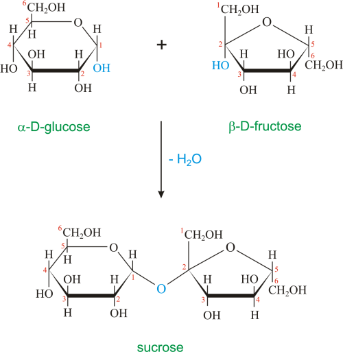 small resolution of honeybees have enzymes called invertases that catalyze the hydrolysis of sucrose honey in fact is primarily a mixture of glucose fructose and sucrose