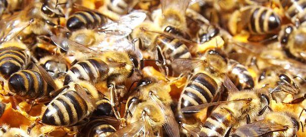 Nahaufnahme eines Bienenstocks
