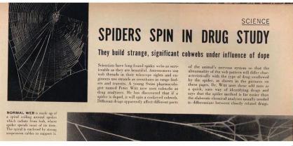 arañas drogadas