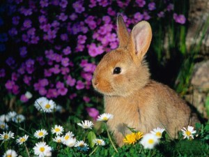 brown_rabbit_with_pink_and_white_flowers