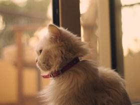 Balas Dendam Mimi, Kucing Sepupuku 2