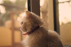 Balas Dendam Mimi, Kucing Sepupuku 4