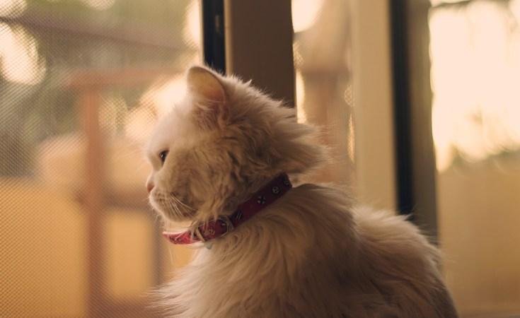 Balas Dendam Mimi, Kucing Sepupuku 5