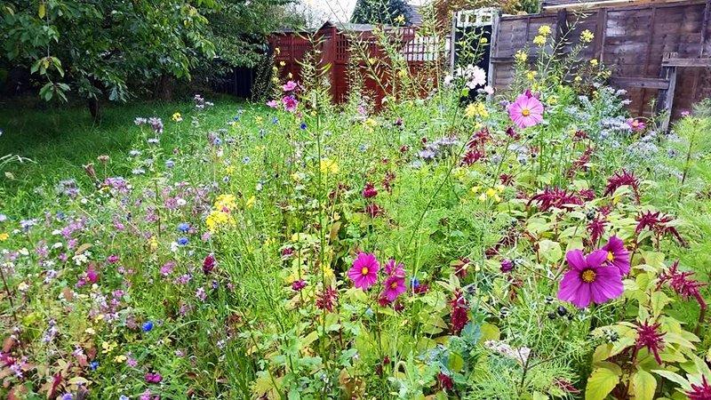 Il ruolo fondamentale di prati e fiori selvatici nel giardino commestibile