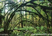 Usa rispondi cambiamento creativita permacultura
