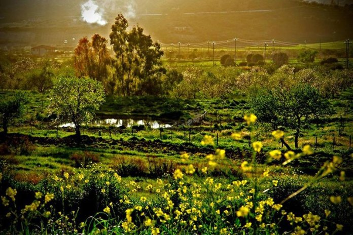 giardino delle belle mario carbone permacultura sicilia