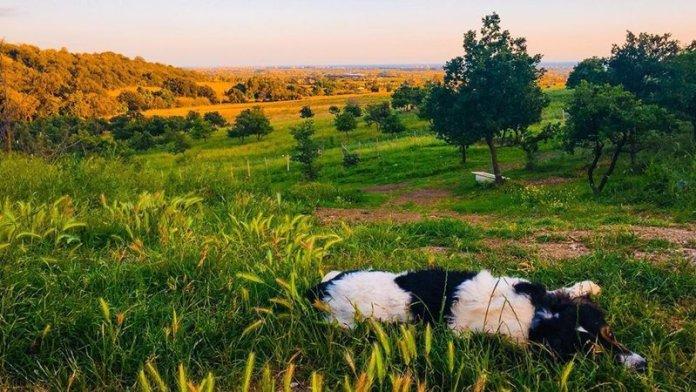 L'asino e la luna permacultura ecovillaggio diffuso